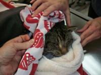 Кот провел 16 дней в трейлере
