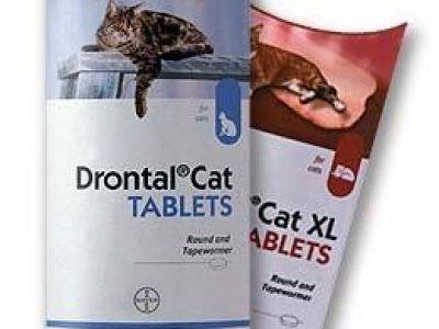 Профилактика глистов у кошек до прививки